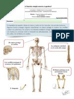 Guia Ciencias Esqueleto