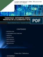 CANAVALIA  CATHARTICA COMO FUENTE DE PROTEÍNA