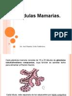 mama histologia