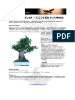 Fiche de Culture Bonsai - Ficus Retusa Ficus Formosanum
