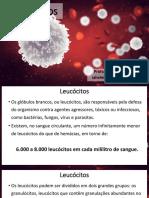 A05_Leucocitos