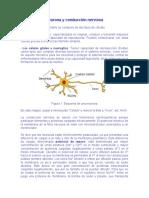 Neurona, conducción nerviosa y Neurotransmisores