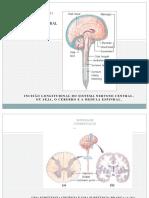 Coordenação Do Sistema Patologia