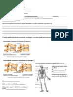 test_sistemul_osos_si_muscular B