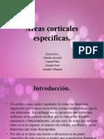 Áreas corticales especificas.