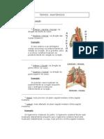 TERMOS anatomicos