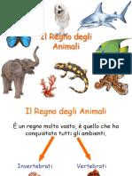 Animali_Invertebrati