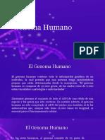 genoma humano Angelina