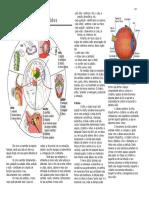 Anatomia do sist. sensorial