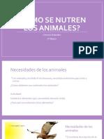 Cómo se nutren los animales