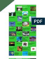 Calendar_ecologic