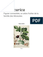 Ficus carica 1