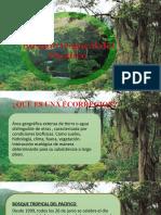 ecologia (1)