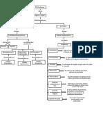 Mapa conceptual Citoplasma