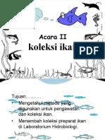 ACARA-koleksi ikan