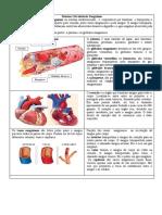 Sistema circulatório 1