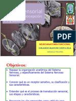 04b Neurofisiologia sensorial