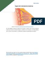 Fisiologia mamaria