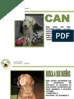 Animalitos Para Adopcion 17 de Marzo 2011