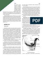 02. Anatomia chirurgicala a sanului
