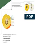 Ficha estudio del fruto.