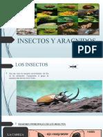 INSECTOS Y ARACNIDOS