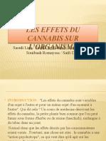 Les Effets Du Cannabis Sur l'Organisme