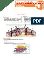 Cubierta y Membrana Celular Para Cuarto Grado de Secundaria
