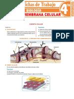 Cubierta-y-membrana-celular-para-Cuarto-Grado-de-Secundaria