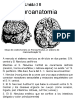 Neuro Anatomia