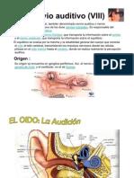 Nervio auditivo (VIII)