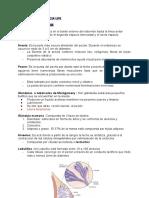SÍNTESIS DE LACTANCIA UP5
