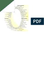 Denti sequenze