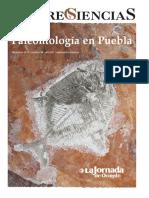 Paleontologia en Puebla Saberes y Cienci