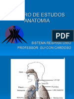 Aula 5 - Sistema respiratório