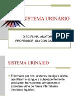 Aula 6 - Sistema urinário