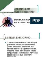 Aula 10 - Sistema glandular