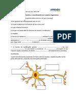 Actividad 2 funcion de relacion y cordinacion en nuestro organismo