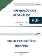 1 - Fluídos Biológicos - Sistema Renal Excretório (1)