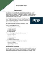GUIA 3 Morfología de Las Plantas - MARLY