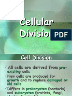 Worksheets Cell Division | Meiosis | Mitosis