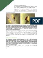 Control biológico de polillas-plaga