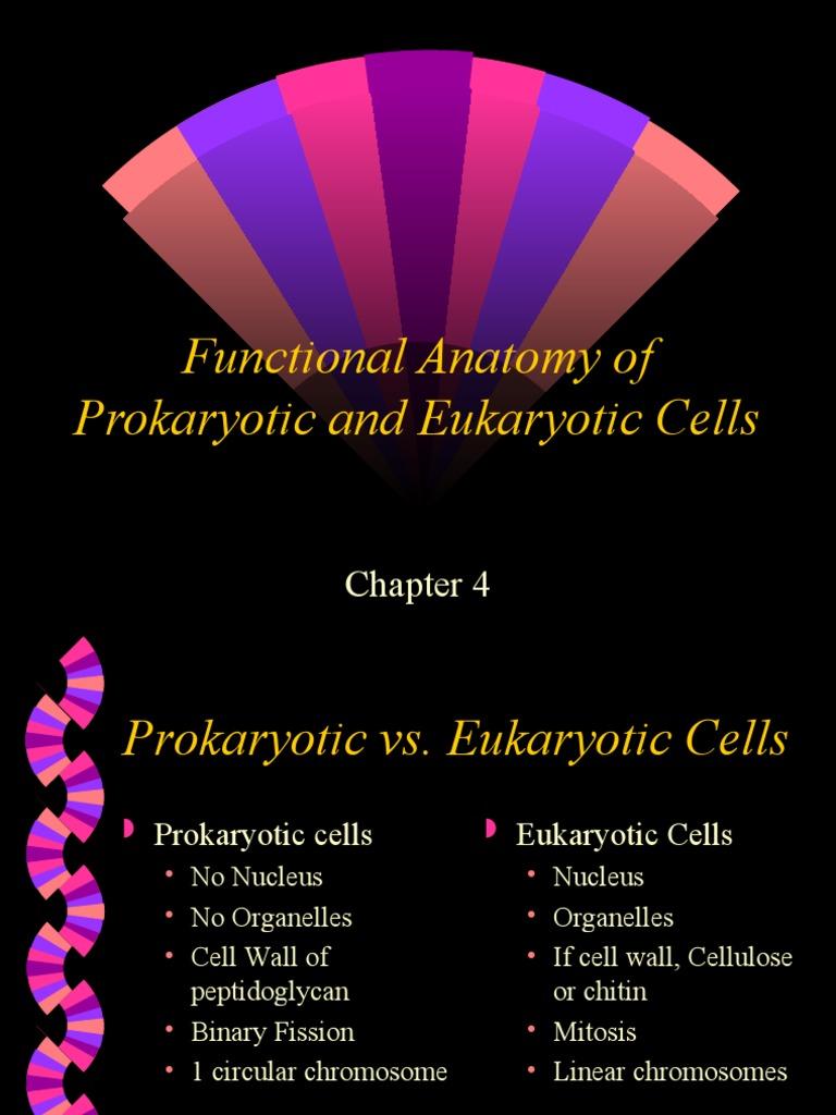 functional eukaryotic