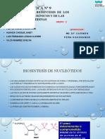 Practica n 09 Bioquimica 2