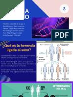 Genoma Humano - Los Grupos Sanguíneos
