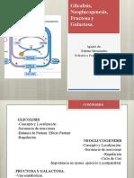 Bioquimica. Glicoslisis y  neoglucogenesis
