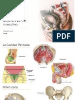 E8 – Pelvis general y periné masculino