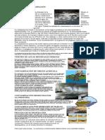 Clases de Contaminacion Reciclage Tala de Arboles Enfermedades en Las Plantas Escaces Del Agua Incendios Forestales Partes de Una Planta