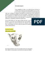 RESEÑA - PAUL GENDROP -  PRECLASICO