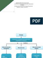 Mapas conceptuales Miologia